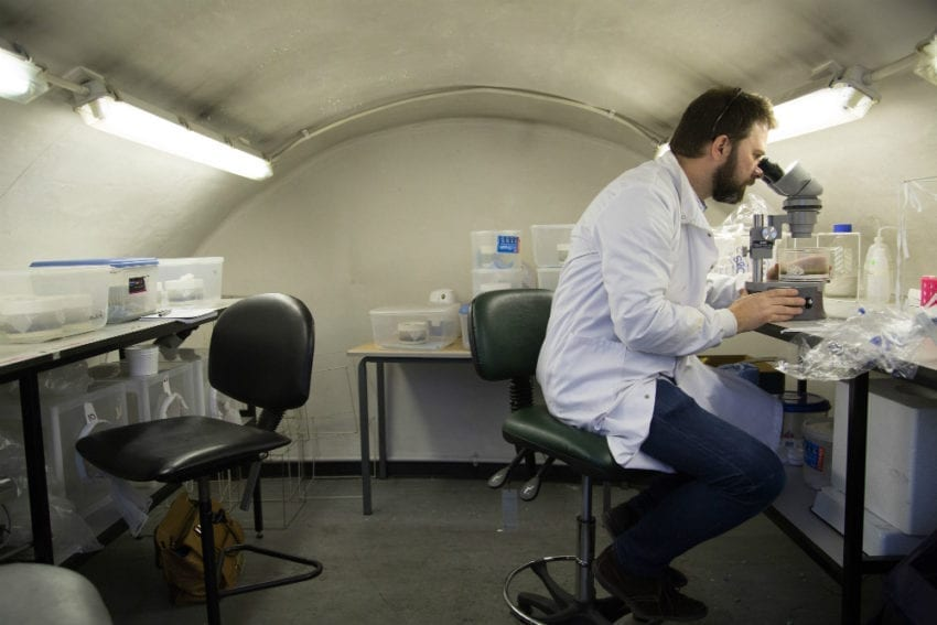 Researcher Matthew Rogers examines the leishmania parasite in his lab at the London School of Hygiene & Tropical Medicine (LSHTM) in the United Kingdom