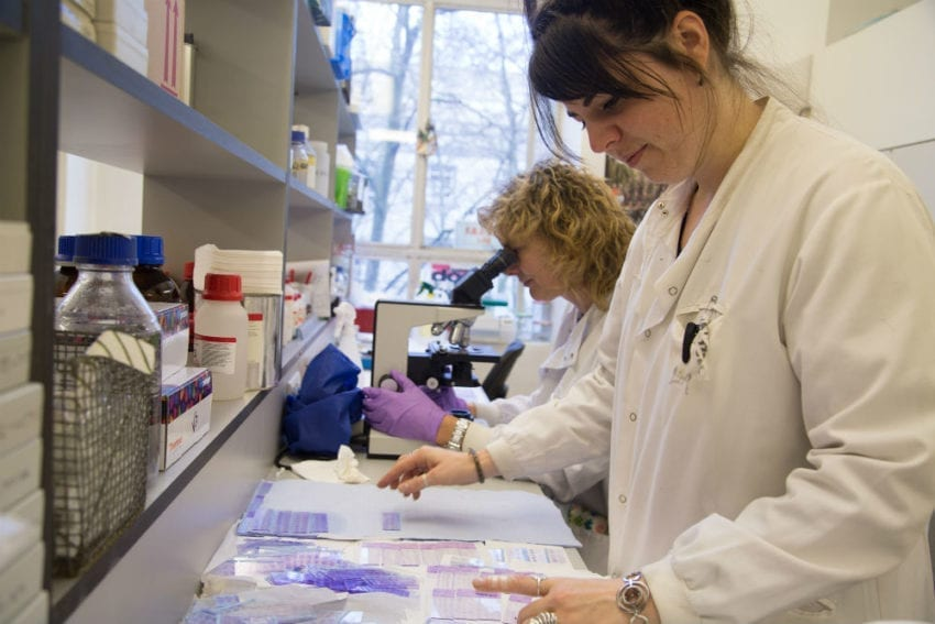 Researchers Katrien Vanbocxlaer (at the front) and Vanessa Yardley examine slides of smears from mouse liver and spleen in a LSHTM lab. These are the organs that are infected by visceral leishmaniasis