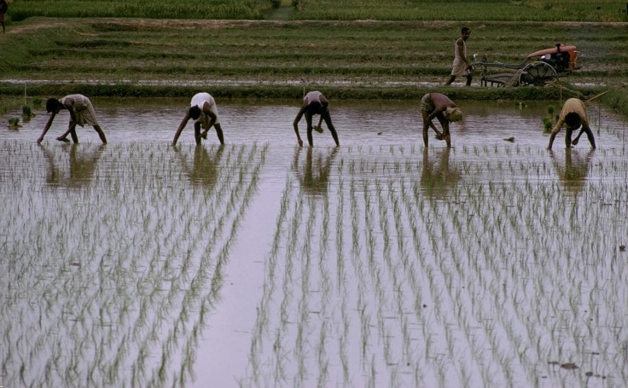 Rice cultivation consumes more than 10 billion cubic meters of water annually via traditional methods