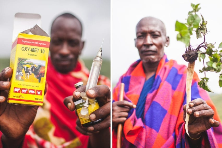 Animal drugs, such as antibiotics (left), are widely available, but stronger regulations mean human drugs are harder to come by. Clinics are often remote and ill-equipped to deal with outbreaks. Maasai use medicinal plants (right) that induce vomiting in humans, believing it purges disease. But vomiting only offers temporary relief