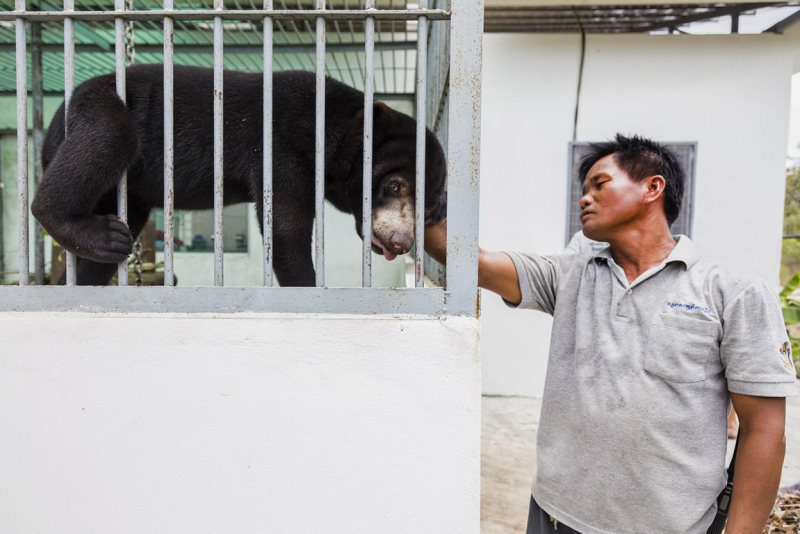 The bear named Blue could not walk when it arrived at the sanctuary. He had spinal problems, which were most likely caused by an injury. Today he can walk and climb thanks to the veterinary care he received at the centre.