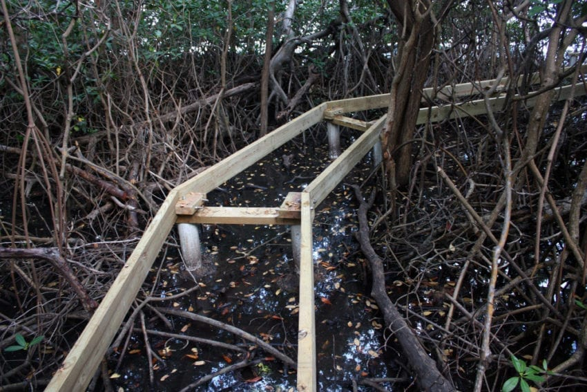 A boardwalk is built through small tracts of mangroves in Paraquita Bay, British Virgin Islands, without disrupting the ecosystem. The aim is to educate islanders and tourists about the importance of mangroves and their uses, such as fishing