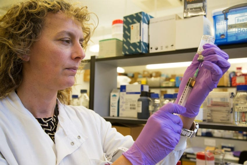 Vanessa Yardley removes the drug AmBisome from a vial. The drug is used to treat leishmaniasis