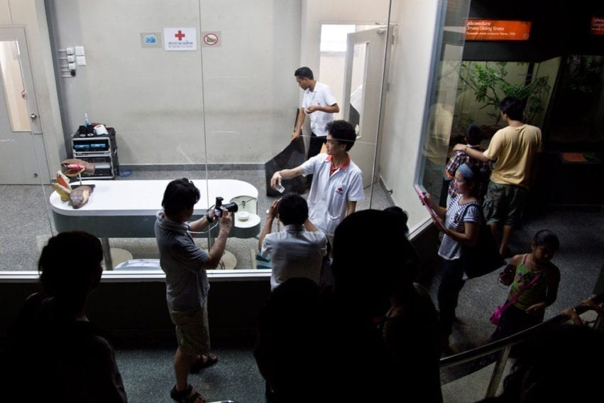 Visitors can watch venom extractions