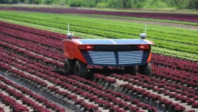 Coming of age: Robots in farms