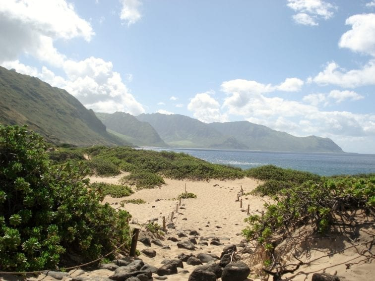 The sand dunes of Ka'ena Point are an important resting place for monk seals and a breeding ground for many types of sea birds. But until their protection began in 1983, they were also a popular driving space for quad bikers.