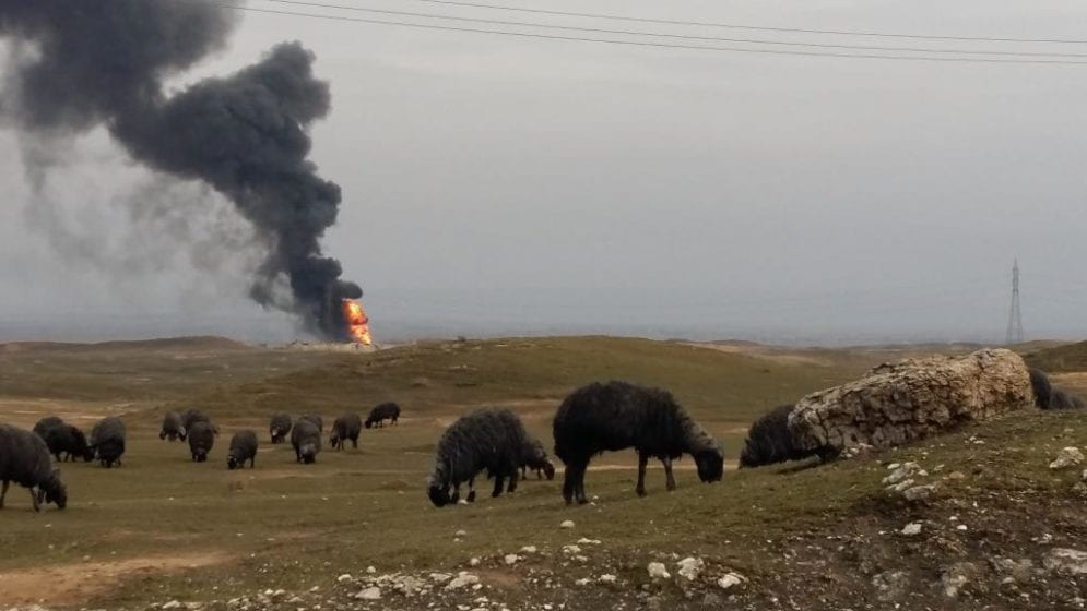 Soot form the burning Qayyarah oil wells settled on the animals that were grazing, turning them black