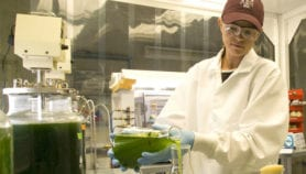 German eco-prize 'benefits developing world researchers'