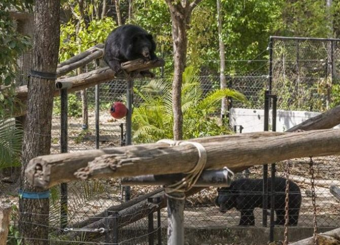 All of the enclosures are furnished with pools, rocks, hammocks, climbing frames, native vegetation and a variety of enrichment toys to ensure that the bears are happy and healthy.
