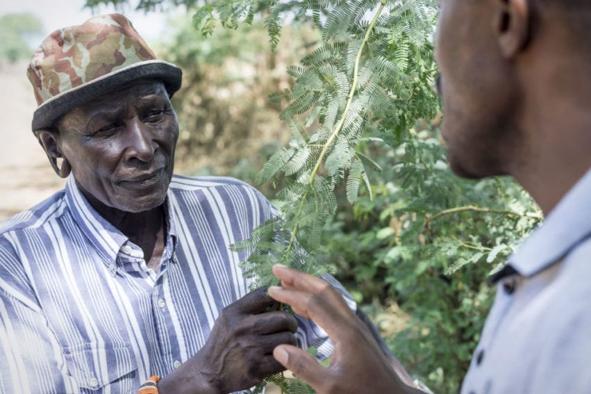 A farmer holding a Prosopis branch explains how difficult it is to live with this invasive weed, whose uncontrollable proliferation can displace entire communities