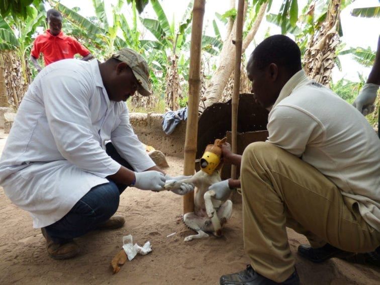 Scientists take a sample of a dog's blood in Ghana. Dogs can be reservoirs for rabies and vector-borne diseases, and transmit these to humans. Globally rabies kills around 60,000 people each year — one person every ten minutes