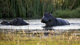 Wildlife gives early warning of antibiotic resistance