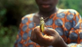 The locust invasions devastating Niger