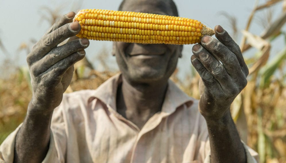A man proudly shows a cob of maize from the latest harvest