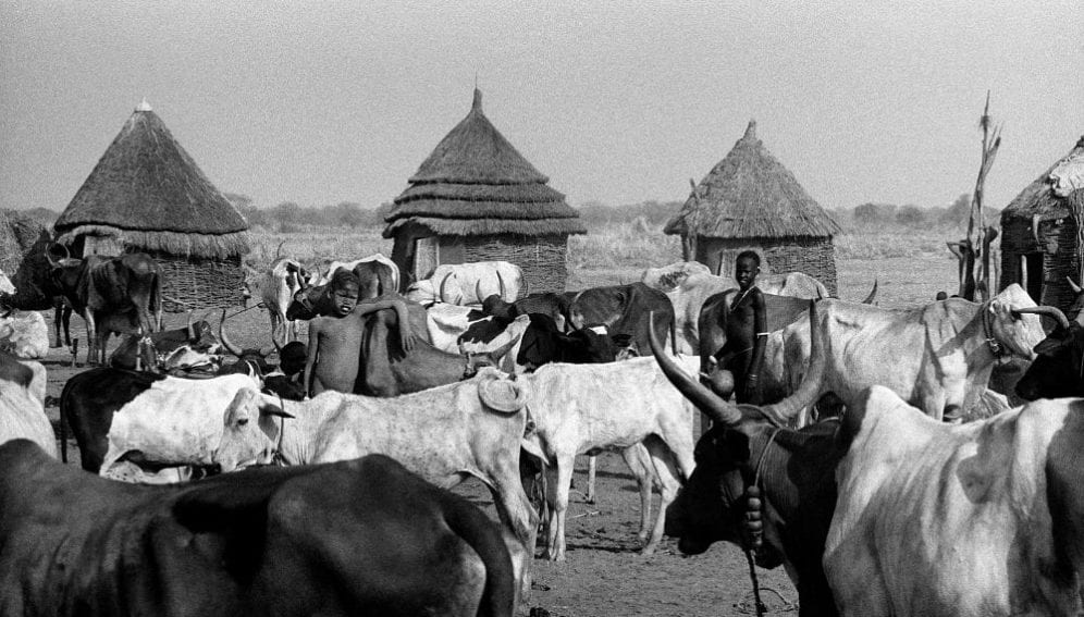 A Nuer cattle camp on the banks of the Baro River.