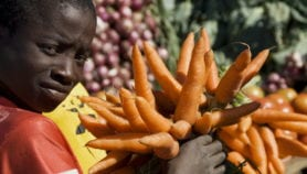 African agriculture needs trade not aid
