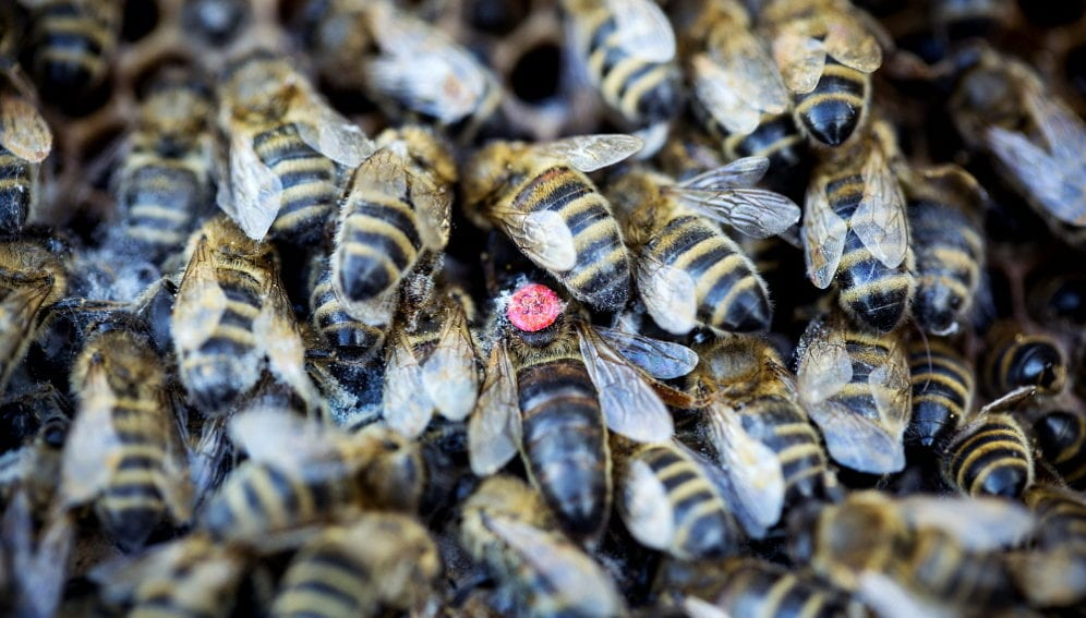 Bees and elephenants_panos.jpg