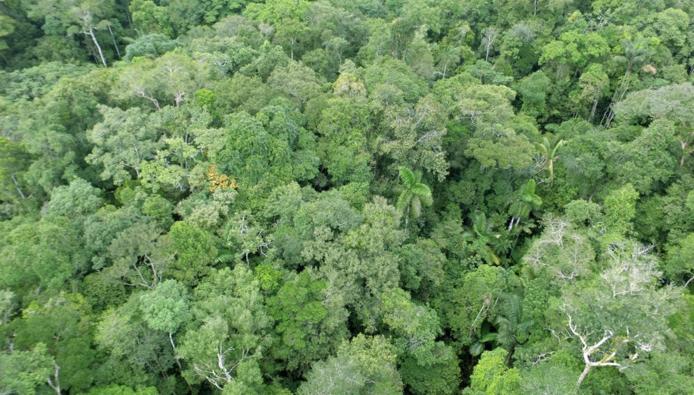bosque amazonia by serfor