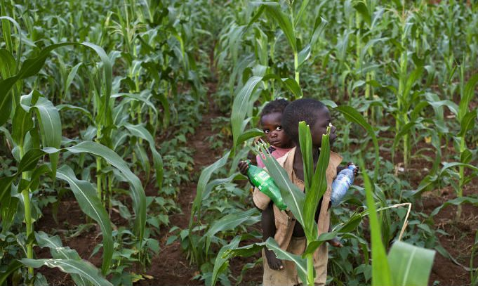 boy_carries_a_toddler_on_his_back_as_they_walk_in_a_field_of_maize_plants.jpg