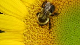 Loss of wild pollinators would hit crops, finds study