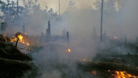 Lung damage from agricultural fires probed