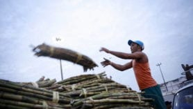 Genetics to boost sugarcane production