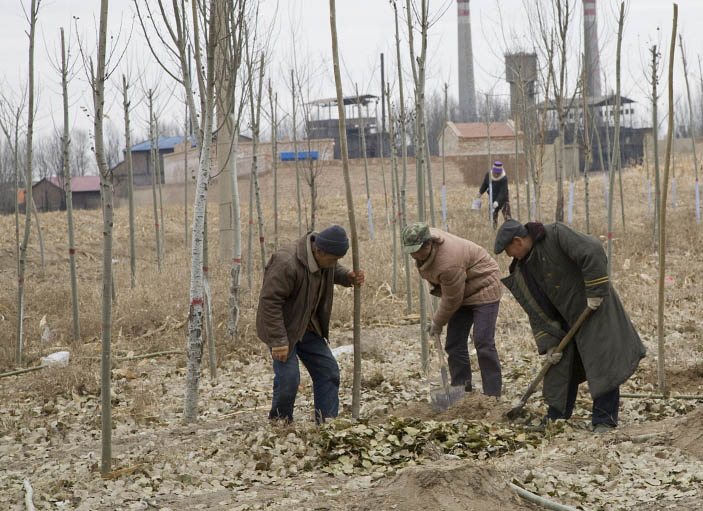 Desertification prevention_Panos cropped