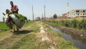 Ancient Egyptian river could be revived for farming