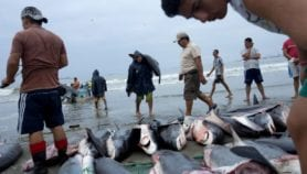 Official figures gravely underplay fish catch