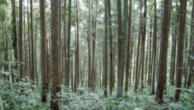 Indigenous people keep carbon locked in forests
