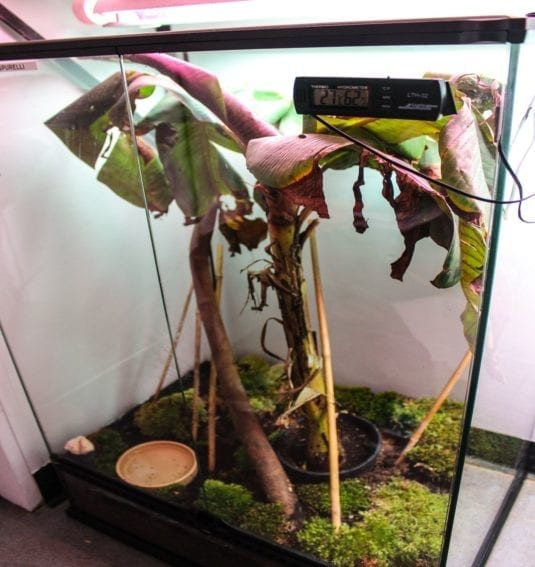 Adult frogs and froglets live in this main tank. Temperature and light levels are regulated to simulate the optimal natural conditions.