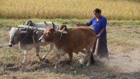 Climate smart villages help female farmers in Nepal