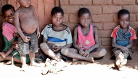 Gut bacteria protect against stunting