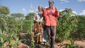 Getting seed to smallholders needs a business approach