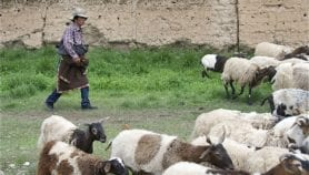 Misguided environmental policy uproots Tibetan nomads