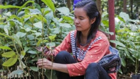 A how-to guide to restoring tropical forests