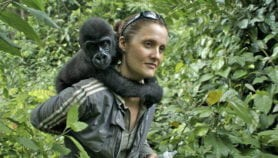 Apes lack Ebola protection, scientists warn