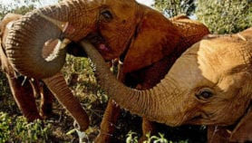 Elephant poaching pinpointed with DNA
