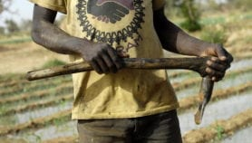 Greater GM protection urged for small-scale farmers
