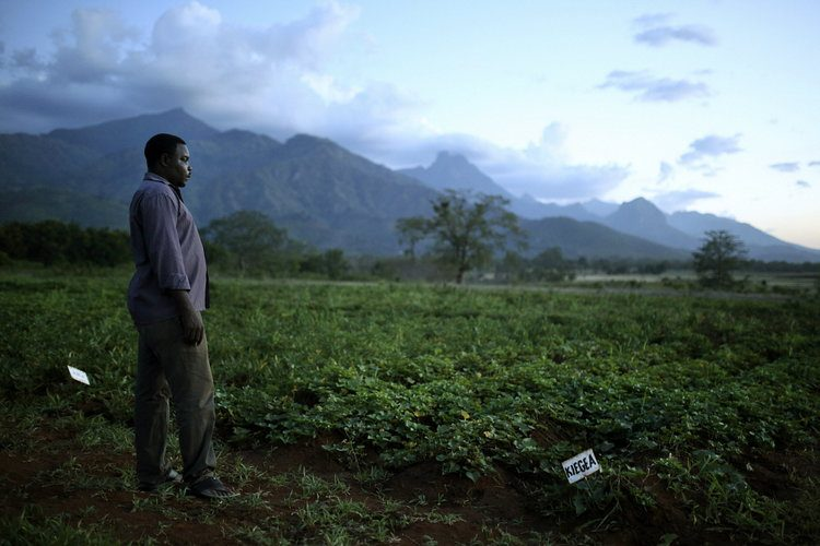 Nutrition Crops Africa