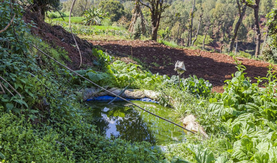 Many parts of Nepal and the wider Himalayan region are water scarce. For this reason, smart villages use the cheap and simple method of laying down plastic sheeting to collect rainwater for irrigation in ponds