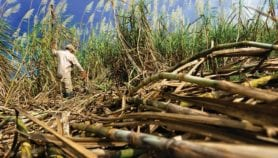 Sugarcane ethanol benefits mapped out for Latin America