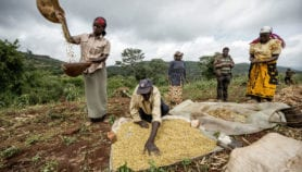 Soybean farmers in east and southern Africa get a boost