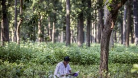 Scientists record the sound of intact forest