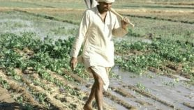 Improved irrigation backed to halve food gap