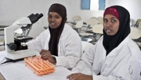 Online tool to track African women in STEM