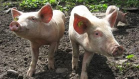 India and China top hot spots of antimicrobial resistance in animals