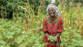 Microloans make farming profitable for Kenyan smallholders