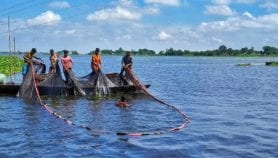 Fairer fish trade could fix nutrient deficiencies in coastal countries