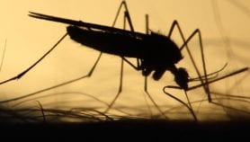 Plan to wipe out malaria comes with hefty price tag